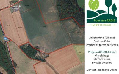 Installation de projets agricoles bio : maraichage, ovins, volailles (Dinant)