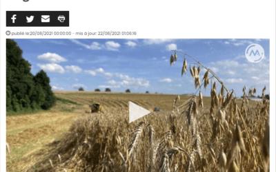 Du pain avec des céréales locales, le pari d'agriculteurs dinantais [Médias]