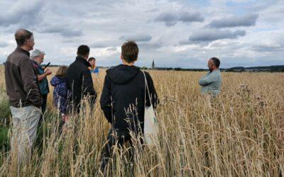 Visite des parcelles de céréales chez les producteurs du réseau